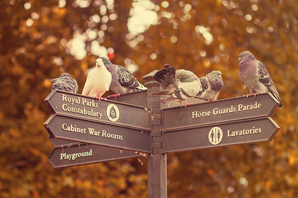 Pigeons on a Sign Post