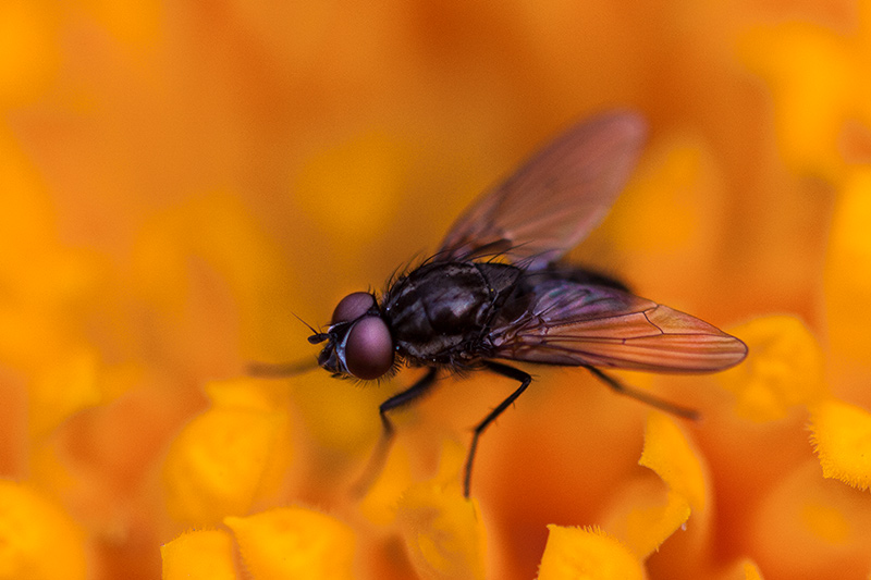A closer photo of a fly on a flower