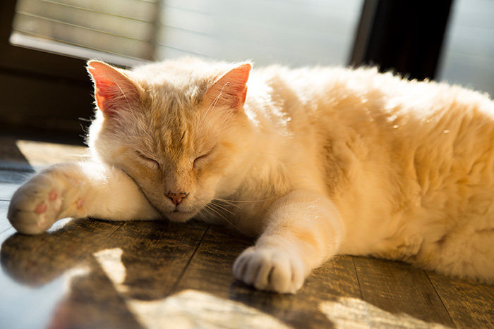 Cat sleeping by the window