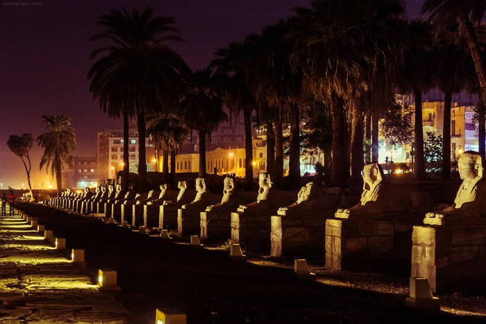 Row of sphinx lit up at night