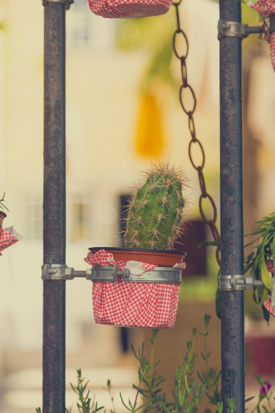 Potted plant hanging on a gate
